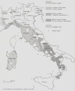 Distribuzione cinghiale 1987