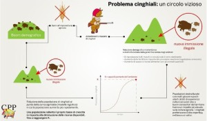 Slide_Cinghiali
