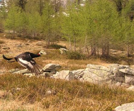 Corso Preparazione Esame Zona Alpi – FIDCVarese